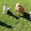 katrina dog training sunshine coast