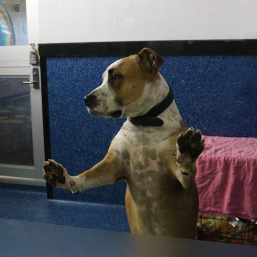 Rescuing a Shelter Dog
