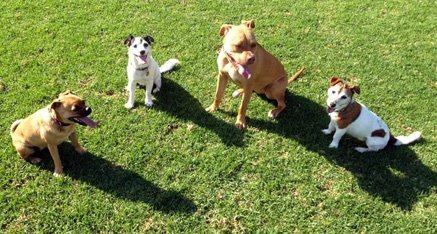barking dogs can be trained to not bark