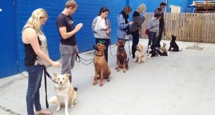 Adolescent Class dog training Sunshine Coast