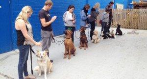 Adolescent Class dog training Coolum