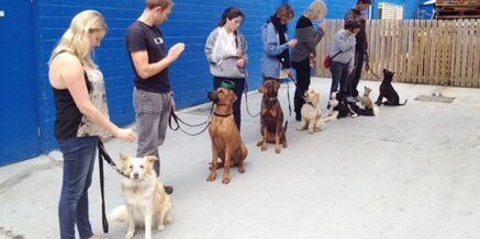 Puppy Education Noosa News, 17 July 2014, page 46