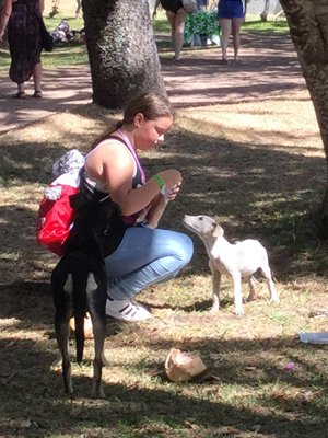 pack dogs in park being fed